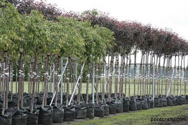 Как правильно выбрать саженцы плодовых деревьев с помощью Greensad