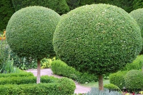Стриженые деревья