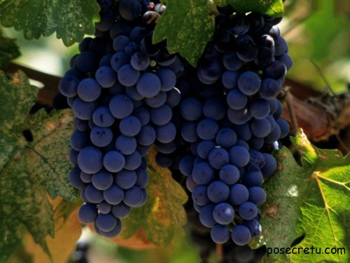 виноград для зубов