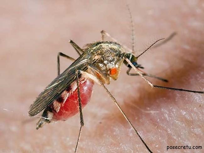 выбираем электронные средства от комаров